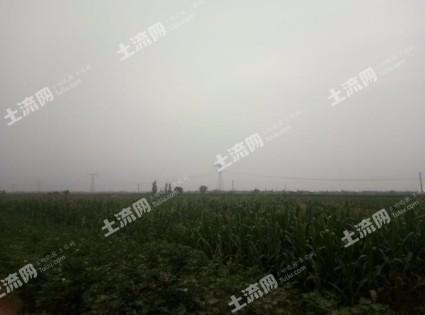 WX1021河北邢台30000亩水浇地出租
