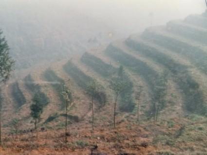 成都崇州市 300亩 其它林地 转让