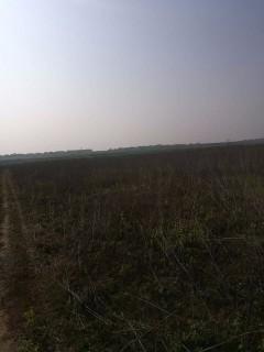 适合种草皮江西南昌周边8000亩水浇地出租