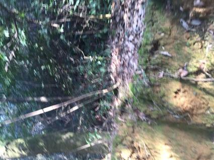 抚州临川区700亩其它林地出租