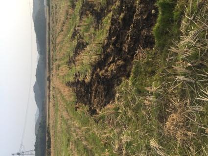 抚州临川区350亩水田转让