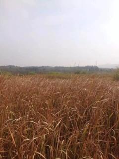 抚州临川区1500亩荒山出租