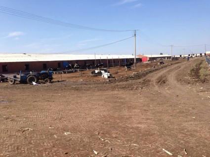 长春榆树市20亩奶牛农场转让