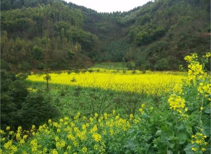 大邑县城附近500亩集体荒山地出租或转让