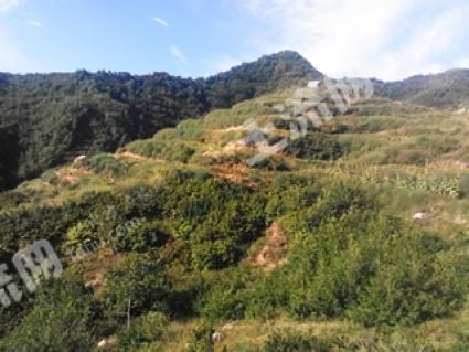 河北秦皇岛2000亩荒山转让
