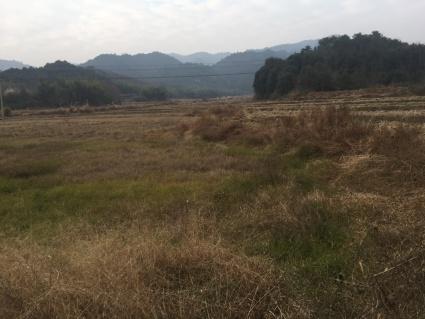 抚州周边500亩荒山出租