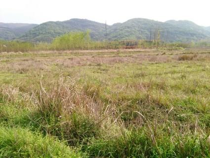 咸宁  赤壁 80亩 旱地 出租