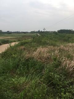 上饶鄱阳县120亩旱地出租