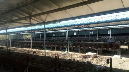 (408)青岛黄岛区15亩养殖用地转让