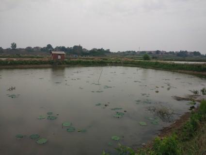 黄冈黄州区50亩水产养殖用地出租