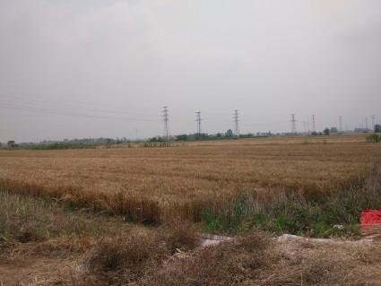 黄冈黄州区400亩水浇地出租