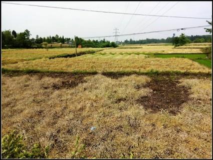 京昆高速黄许出口附近100亩水田出租