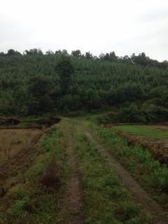 长沙浏阳市 200亩耕地 林地 出租
