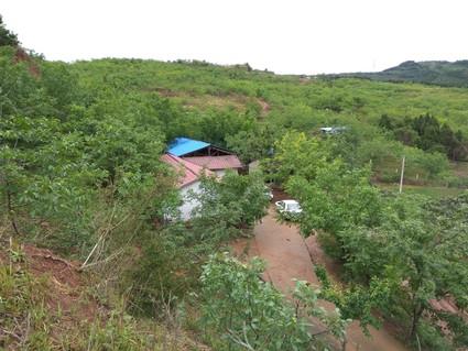 简阳贾家镇附近 300余亩核桃林林下 出租