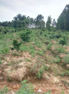 T-022 永州  道县 21亩 其它林地 出租