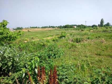黄冈浠水县100亩旱地出租