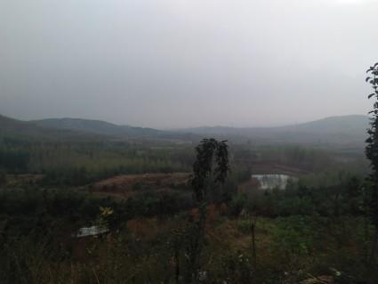 (125)青岛黄岛区 1800亩 山林 转让