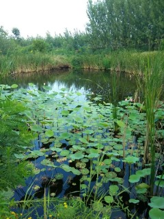 (111)青岛黄岛区 60亩 水库 出租