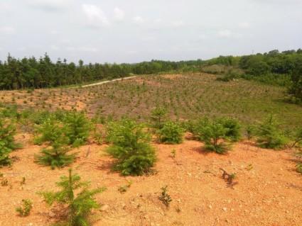 咸宁  赤壁 70亩 有林地 出租