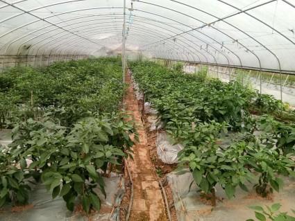 重庆璧山区 30亩 水浇地 出租