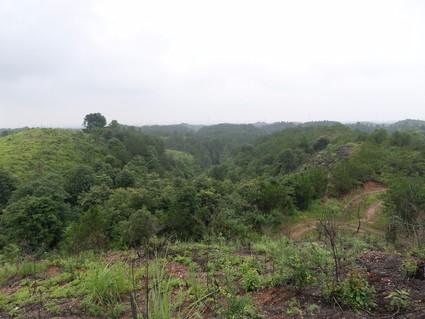 长沙浏阳市 1000亩 其它林地 出租