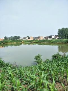 阜阳颍上县65亩水产养殖用地出租