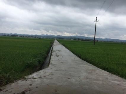 湘潭湘潭县500亩水田出租