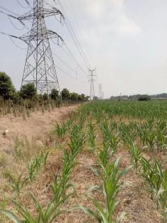 信阳光山县1000亩旱地出租