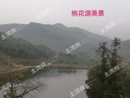 漳州龙海市1000亩其它林地转包