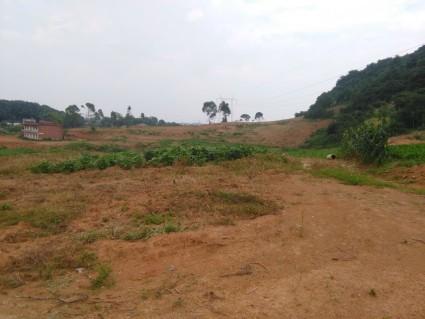 赤壁 240亩 缓坡地旱地出租