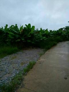 南宁西乡塘区460亩香蕉地出租