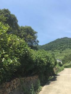 江苏苏州500亩其它林地转让
