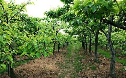 驻马店西平县300亩水浇地出租,内含100亩果园
