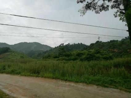 南宁兴宁区1700亩有林地转包