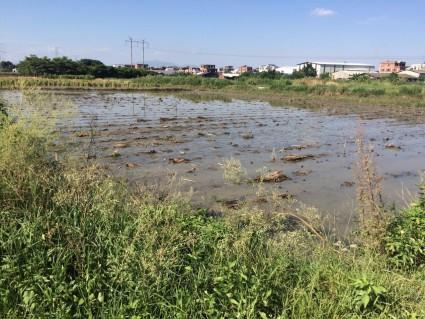 漳州  龙海 2.1亩 水田 转让