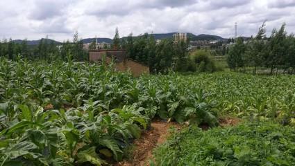 曲靖马龙县20亩农家乐用地转让