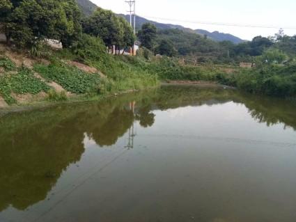 重庆璧山区35亩坑塘转包