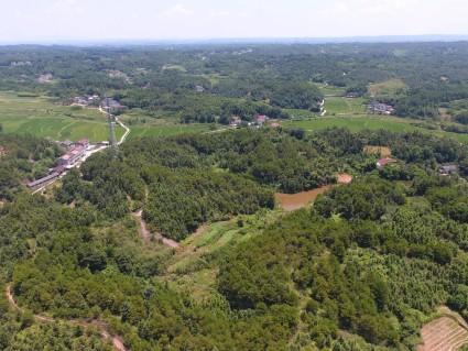 湖南  常德 300亩 有林地 出租