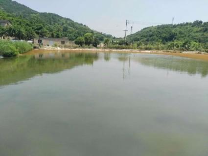 重庆沙坪坝区30亩水产养殖用地转包