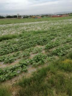 内蒙古赤峰13亩其它耕地转让
