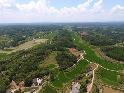湖南  常德 400亩 有林地 出租