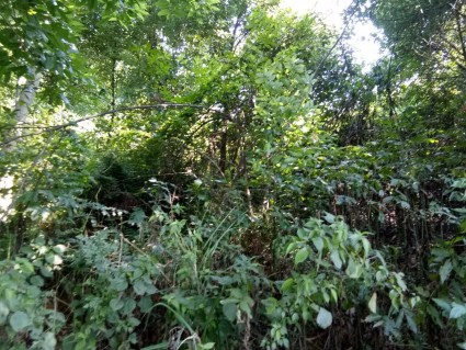重庆璧山区50亩其它林地出租