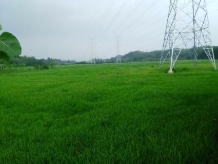 咸宁  赤壁 200亩 水田 出租