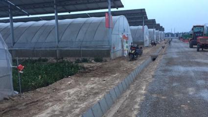 德州武城县 6000亩 水浇地 出租