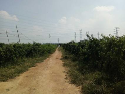 徐州新沂市 35亩已挂果桃园转让