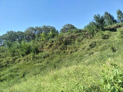 洛阳孟津县 887亩 有林地 转让