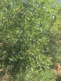 洛阳新安县 300亩 灌木林地 转让