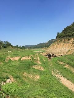 洛阳  孟津 1000亩 有林地 转让