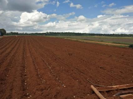 曲靖陆良县600亩水浇地出租适合种药材、蔬菜