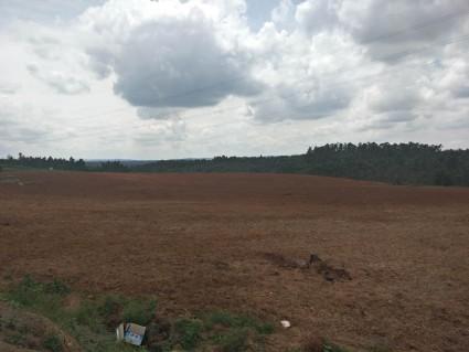 曲靖陆良县120亩水浇地出租适合种植药材、花卉